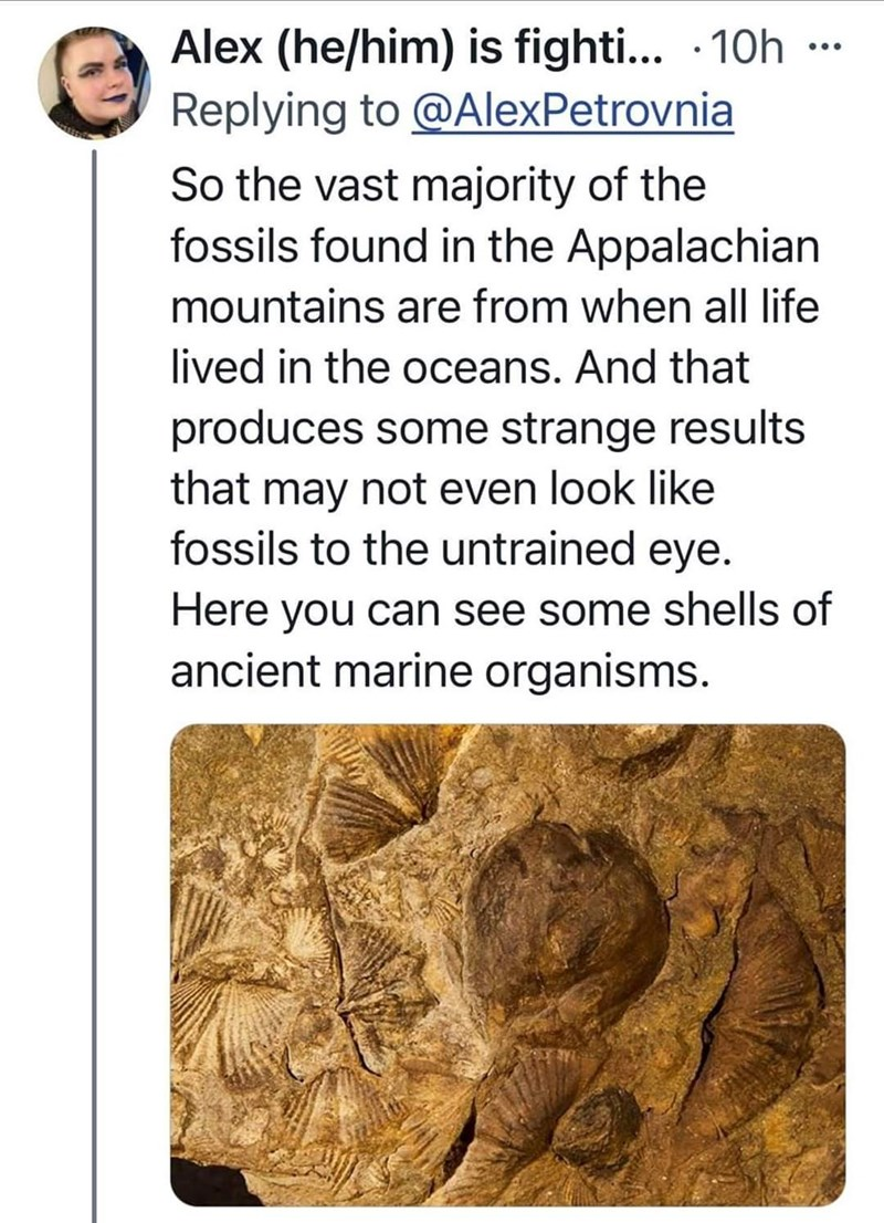 Head - Alex (he/him) is fighti... - 10h - Replying to @AlexPetrovnia ... So the vast majority of the fossils found in the Appalachian mountains are from when all life lived in the oceans. And that produces some strange results that may not even look like fossils to the untrained eye. Here you can see some shells of ancient marine organisms.