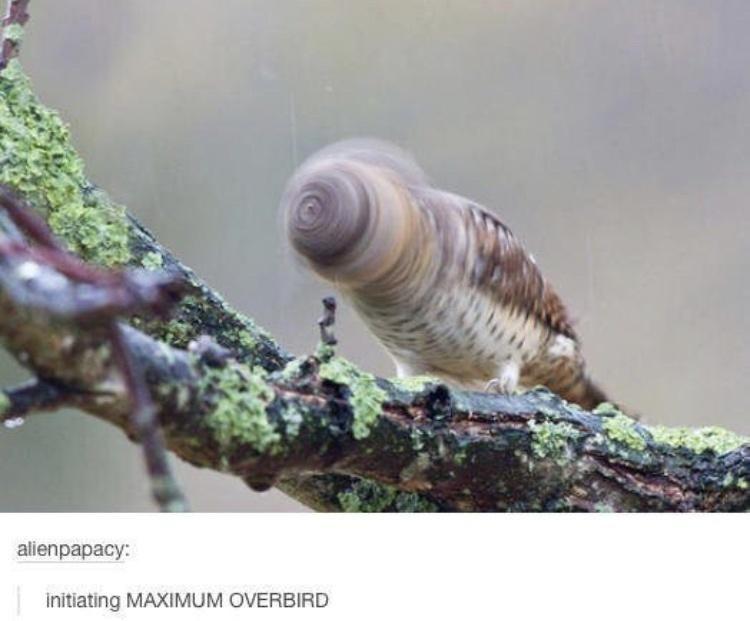 Organism - alienpapacy: initiating MAXIMUM OVERBIRD