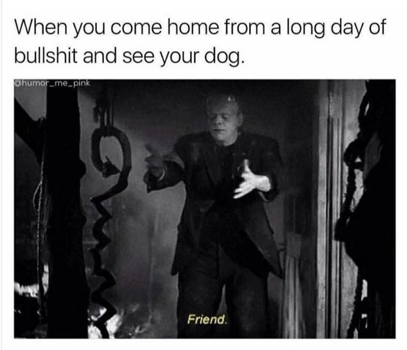 Human - When you come home from a long day of bullshit and see your dog. @humor_me_pink Friend.