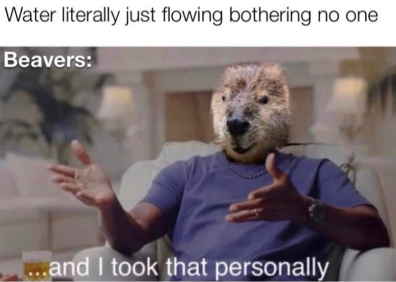 Photograph - Water literally just flowing bothering no one Beavers: ...and I took that personally