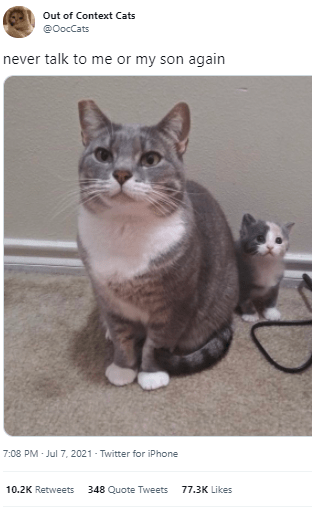 Cat - Out of Context Cats @OocCats never talk to me or my son again 7:08 PM - Jul 7, 2021 - Twitter for iPhone 10.2K Retweets 348 Quote Tweets 77.3K Likes