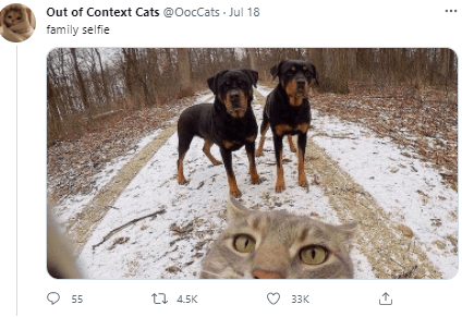 Dog - Out of Context Cats @OocCats Jul 18 family selfie 55 t1 4.5K 33K