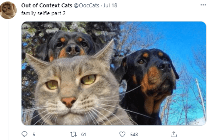 Photograph - Out of Context Cats @OocCats - Jul 18 family selfie part 2 t1 61 548