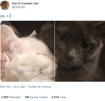 Cat - Out of Context Cats @OocCats us <3 8:03 PM - Jul 4, 2021 - Twitter for iPhone 1,093 Retweets 106 Quote Tweets 6,916 Likes