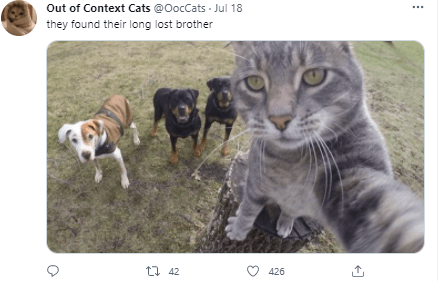 Cat - Out of Context Cats @OocCats - Jul 18 they found their long lost brother t1 42 426