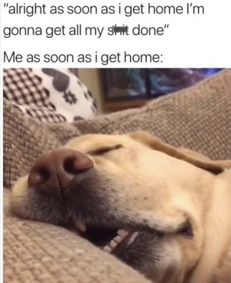 """Dog - """"alright as soon as i get home I'm gonna get all my shit done"""" Me as soon as i get home:"""
