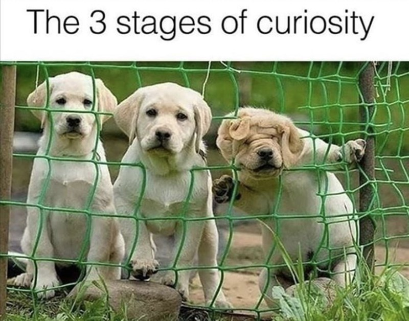 Dog - The 3 stages of curiosity