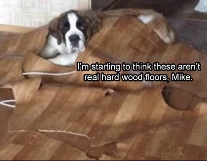 Dog - I'm starting to think these aren't real hard wood floors, Mike.