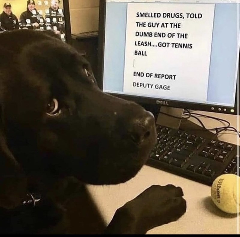 Computer - SMELLED DRUGS, TOLD THE GUY AT THE DUMB END OF THE LEASH...GOT TENNIS BALL END OF REPORT DEPUTY GAGE DOLL