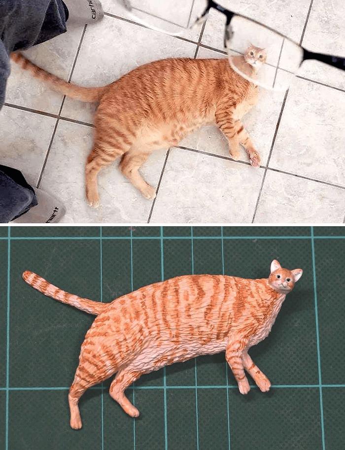 Cat - Carhe