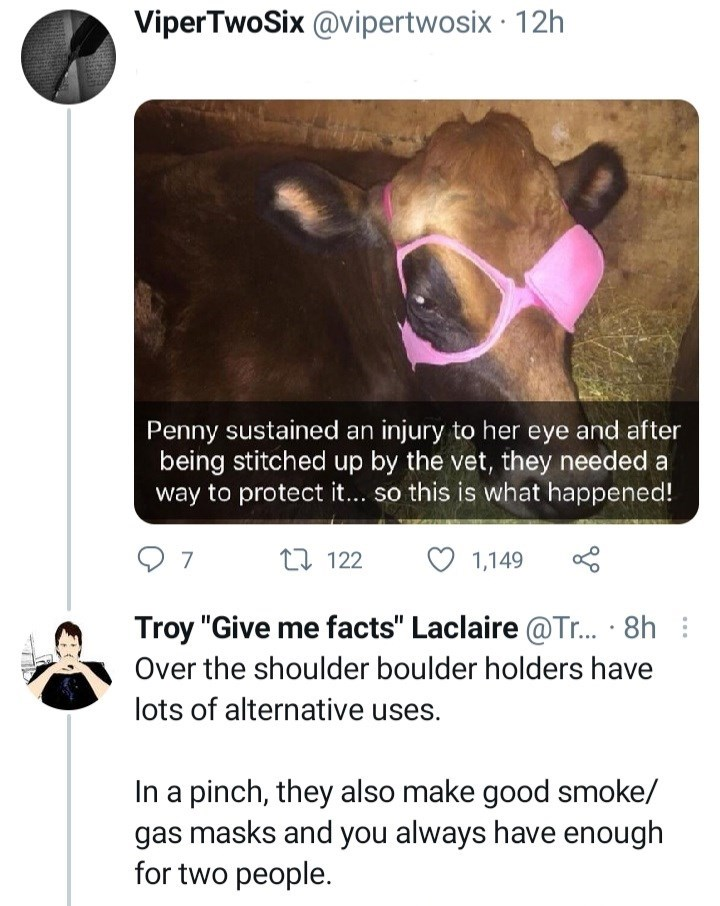 """Vertebrate - ViperTwoSix @vipertwosix · 12h Penny sustained an injury to her eye and after being stitched up by the vet, they needed a way to protect it... so this is what happened! 7 17 122 1,149 Troy """"Give me facts"""" Laclaire @Tr. · 8h : Over the shoulder boulder holders have lots of alternative uses. In a pinch, they also make good smoke/ gas masks and you always have enough for two people."""