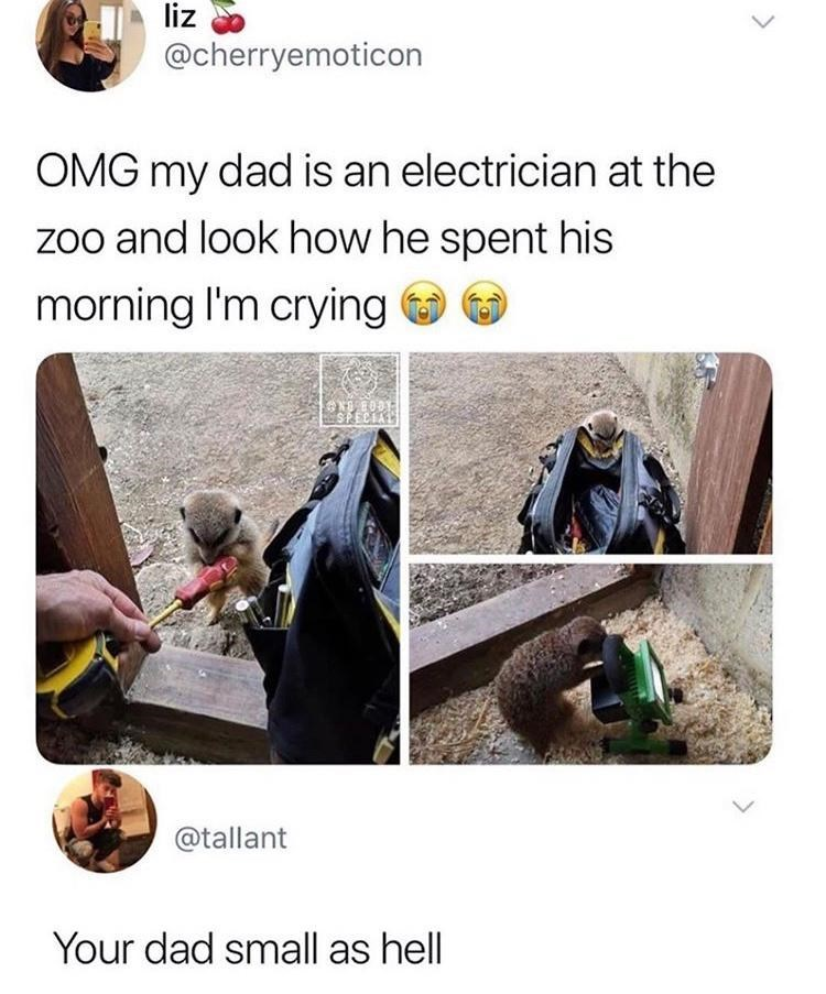 Vertebrate - liz @cherryemoticon OMG my dad is an electrician at the zoo and look how he spent his morning I'm crying O @tallant Your dad small as hell
