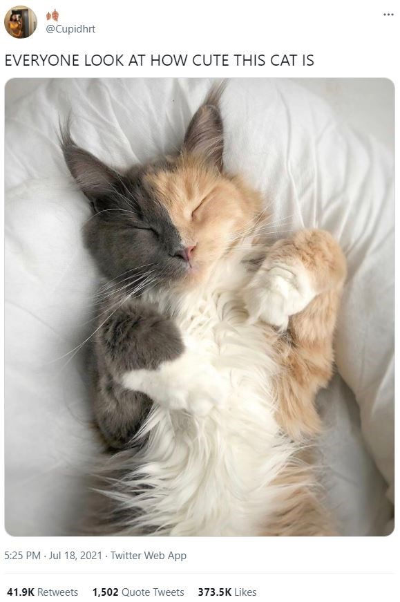 Cat - ... @Cupidhrt EVERYONE LOOK AT HOW CUTE THIS CAT IS 5:25 PM Jul 18, 2021 - Twitter Web App 41.9K Retweets 1,502 Quote Tweets 373.5K Likes