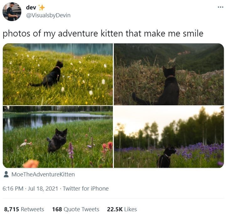 Plant - dev @VisualsbyDevin photos of my adventure kitten that make me smile 8 MoeTheAdventurekitten 6:16 PM Jul 18, 2021 · Twitter for iPhone 8,715 Retweets 168 Quote Tweets 22.5K Likes