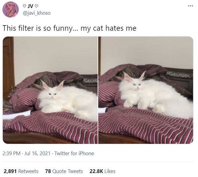 Cat - O JV O @javi_khoso This filter is so funny... my cat hates me 2:39 PM Jul 16, 2021 - Twitter for iPhone 2,891 Retweets 78 Quote Tweets 22.8K Likes