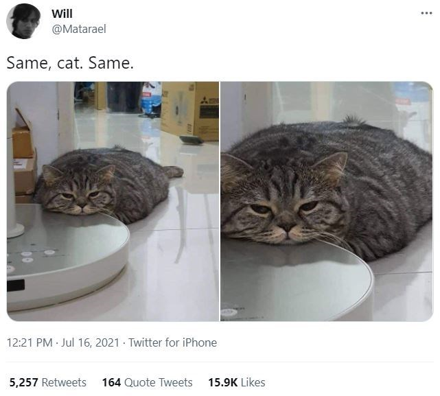 Cat - Will @Matarael Same, cat. Same. 12:21 PM Jul 16, 2021 · Twitter for iPhone 5,257 Retweets 164 Quote Tweets 15.9K Likes
