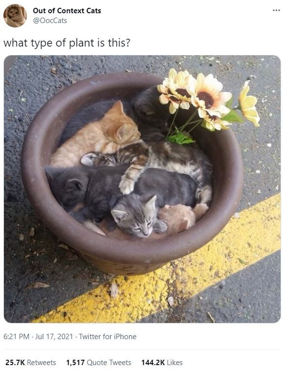 Vertebrate - Out of Context Cats ... @OocCats what type of plant is this? 6:21 PM - Jul 17, 2021 - Twitter for iPhone 25.7K Retweets 1,517 Quote Tweets 144.2K Likes