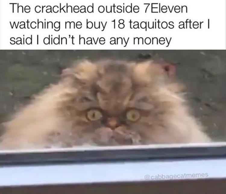 Hair - The crackhead outside 7Eleven watching me buy 18 taquitos after I said I didn't have any money @cabbagecatmemes