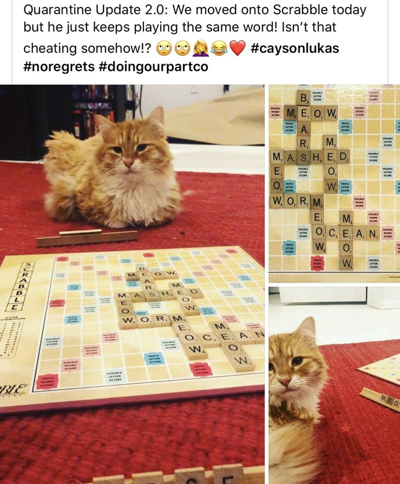 Cat - Cat - Quarantine Update 2.0: We moved onto Scrabble today but he just keeps playing the same word! Isn't that cheating somehow!? #noregrets #doingourpartco #caysonlukas DOUBLE B, UTTER SCORE woRp SCORI DOUBLE DOUBLE М. Е, О, W. WORD SCORE WORD SCORI TRIPE TRIPLE A, LTTER LETTER SCORE SCORE M. R, DOUBLE LETTER SCORE М, А, S, H. E, D, DOUBLE SCORE E, O, DOUBLE LETTER DOUBLI LETTER SCORE SCORE TRIPLE W. TRIPLE UTTER SCORE LETTER SCORE W. O, R, M, DOUBLE WORD SCORE E, DOUBLE M, WORD SCORE О, С