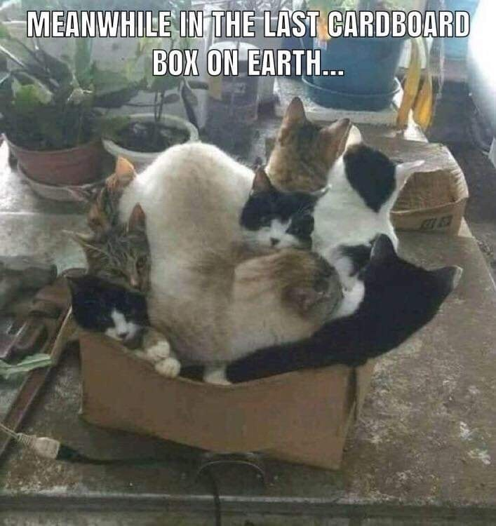 Plant - MEANWHILE IN THE LAST CARDBOARD BOX ON EARTH..