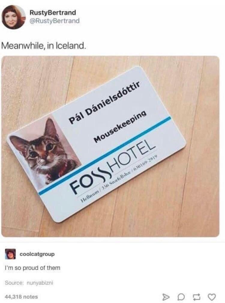 Brown - RustyBertrand @RustyBertrand Meanwhile, in Iceland. Pál Dánielsdóttir Mousekeeping FOSSHOTEL Hellnum/356 Snafellsbæ /630169-2919 coolcatgroup I'm so proud of them Source: nunyabizni 44,318 notes > D E O