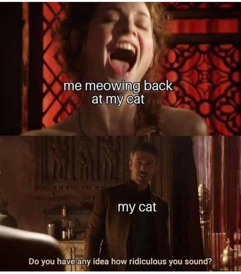 Human - me meowing back at my cat IRCCIC TO my cat Do you have any idea how ridiculous you sound?