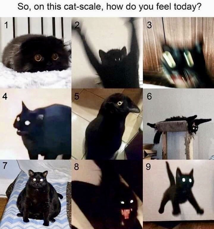 Photograph - So, on this cat-scale, how do you feel today? 1 3 4 6. 7 8 9.