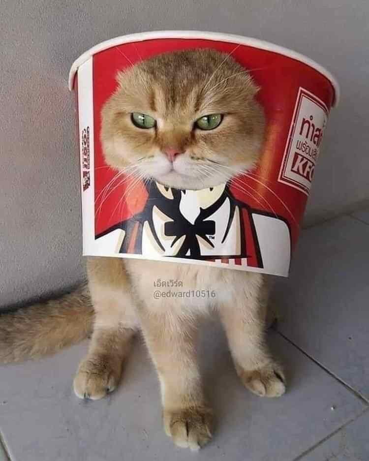 Cat - ma KF เอ็ดเวิร์ด @edward10516