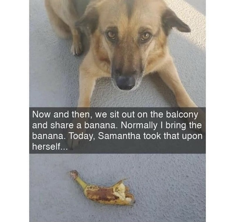 Dog - Now and then, we sit out on the balcony and share a banana. Normally I bring the banana. Today, Samantha took that upon herself...