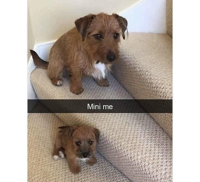 Brown - Mini me