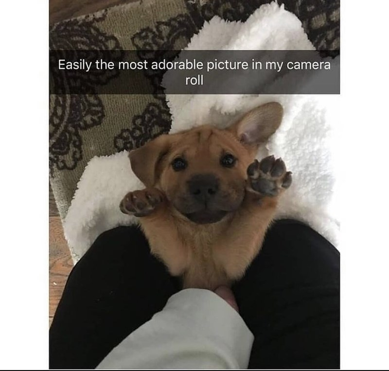 Product - Easily the most adorable picture in my camera roll