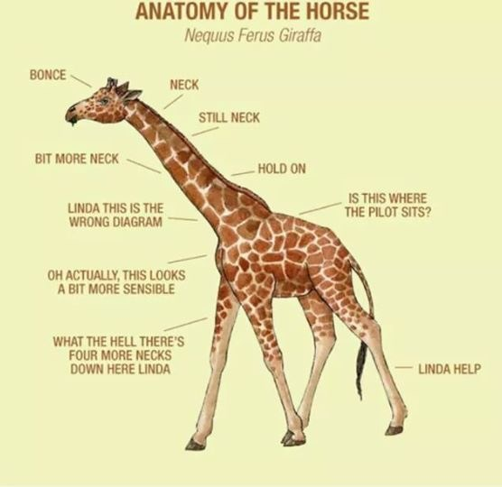 Giraffe - ANATOMY OF THE HORSE Nequus Ferus Giraffa BONCE NECK STILL NECK BIT MORE NECK - HOLD ON LINDA THIS IS THE WRONG DIAGRAM IS THIS WHERE THE PILOT SITS? OH ACTUALLY, THIS LOOKS A BIT MORÉ SENSIBLE WHAT THE HELL THERE'S FOUR MORE NECKS DOWN HERE LINDA LINDA HELP