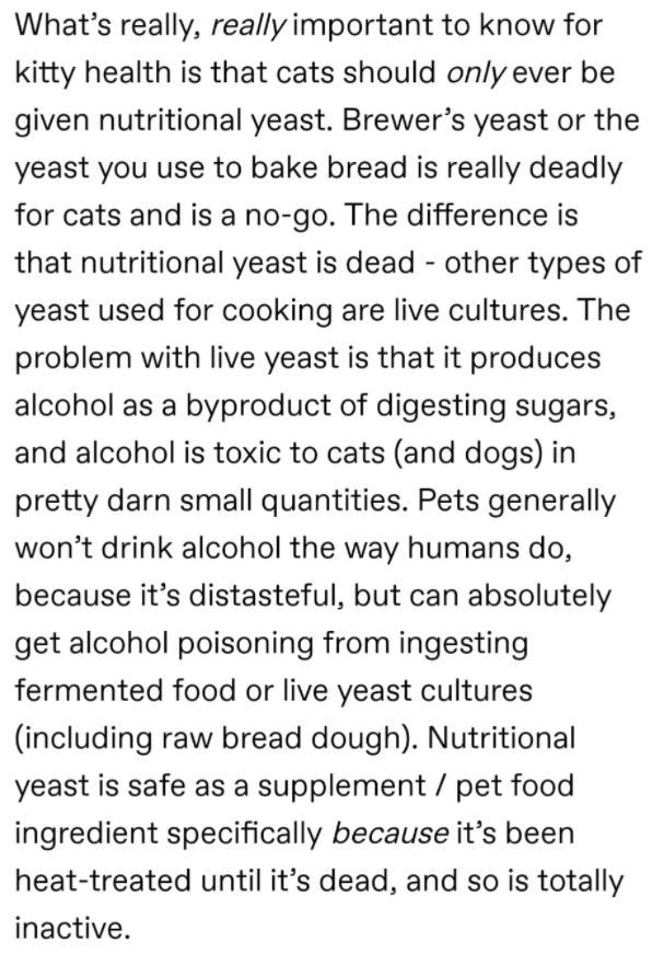 Font - What's really, really important to know for kitty health is that cats should only ever be given nutritional yeast. Brewer's yeast or the yeast you use to bake bread is really deadly for cats and is a no-go. The difference is that nutritional yeast is dead - other types of yeast used for cooking are live cultures. The problem with live yeast is that it produces alcohol as a byproduct of digesting sugars, and alcohol is toxic to cats (and dogs) in pretty darn small quantities. Pets generall
