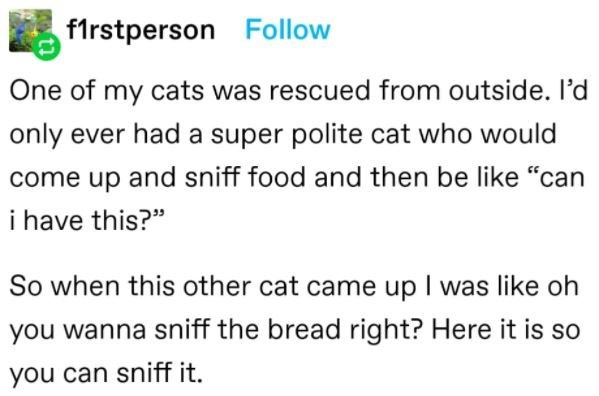 """Font - flrstperson Follow One of my cats was rescued from outside. l'd only ever had a super polite cat who would come up and sniff food and then be like """"can i have this?"""" So when this other cat came up I was like oh you wanna sniff the bread right? Here it is so you can sniff it."""