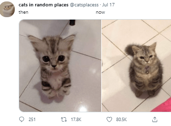 Cat - cats in random places @catsplacess - Jul 17 then now O 251 17 17.8K 80.5K