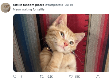 Cat - cats in random places @catsplacess Jul 16 Meow waiting for selfie O 141 ti 10.2K 51K