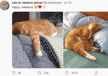 Cat - cats in random places @catsplacess - Jul 18 happy weekend O 49 ti 34K 18.1K