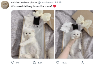 White - cats in random places @catsplacess - Jul 19 Who need delivery boxes like these? O 94 t7 3.6K O 16.2K