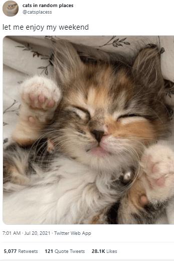 Cat - cats in random places @catsplacess let me enjoy my weekend 7:01 AM - Jul 20, 2021 Twitter Web App 5,077 Retweets 121 Quote Tweets 28.1K Likes