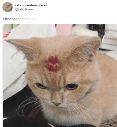 Cat - cats in random places @catsplacess kisssssssssssssss