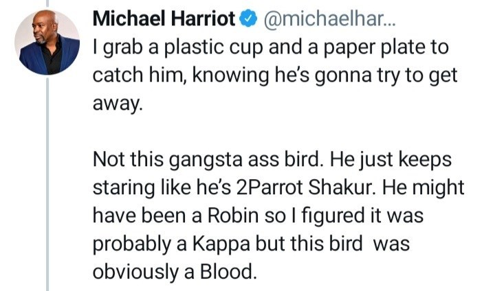 Font - Michael Harriot O @michaelhar. I grab a plastic cup and a paper plate to catch him, knowing he's gonna try to get away. Not this gangsta ass bird. He just keeps staring like he's 2Parrot Shakur. He might have been a Robin so I figured it was probably a Kappa but this bird was obviously a Blood.