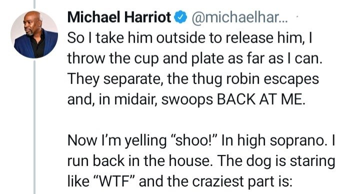 """Gesture - Michael Harriot O @michaelhar. So l take him outside to release him, I throw the cup and plate as far as I can. They separate, the thug robin escapes and, in midair, swoops BACK AT ME. Now I'm yelling """"shoo!"""" In high soprano. I run back in the house. The dog is staring like """"WTF"""" and the craziest part is:"""