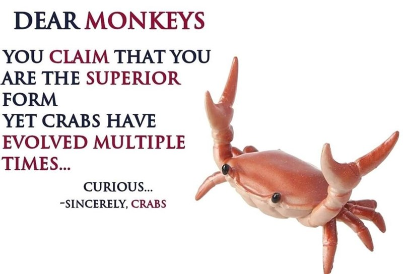 Gesture - DEAR MONKEYS YOU CLAIM THAT YOU ARE THE SUPERIOR FORM YET CRABS HAVE EVOLVED MULTIPLE TIMES... CURIOUS... -SINCERELY, CRABS
