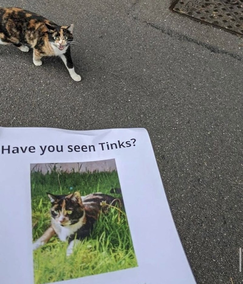 Plant - Have you seen Tinks?