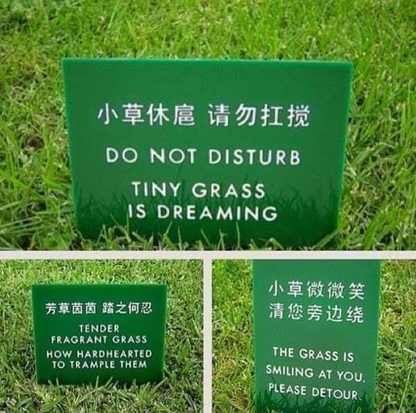 Plant - 小草休扈 请勿扛搅 DO NOT DISTURB TINY GRASS IS DREAMING 小草微微笑 清您旁边绕 芳草茵茵踏之何忍 TENDER FRAGRANT GRASS THE GRASS IS HOW HARDHEARTED TO TRAMPLE THEM SMILING AT YOU. PLEASE DETOUR.