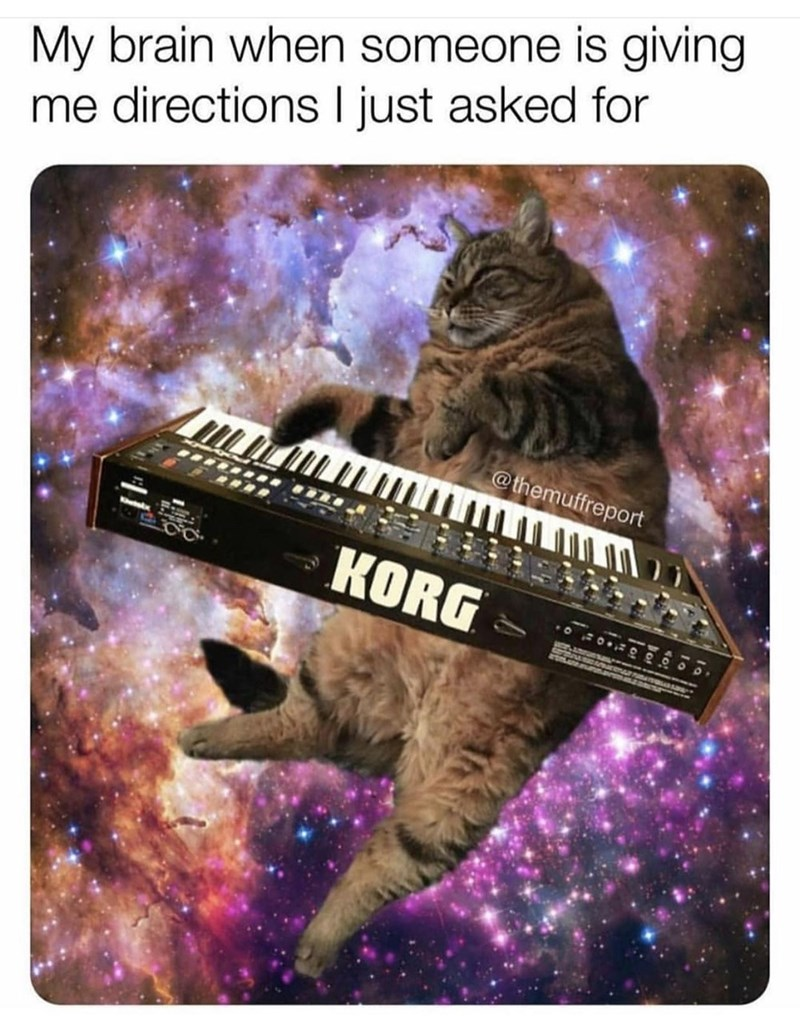 Cat - My brain when someone is giving me directions I just asked for @themuffreport KORG