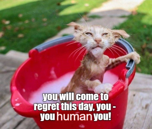 Cat - you will come to regret this day, you - you human you!