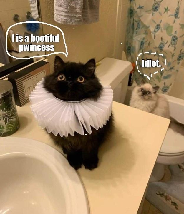 Cat - lis a bootiful pwincess Idiot. I me