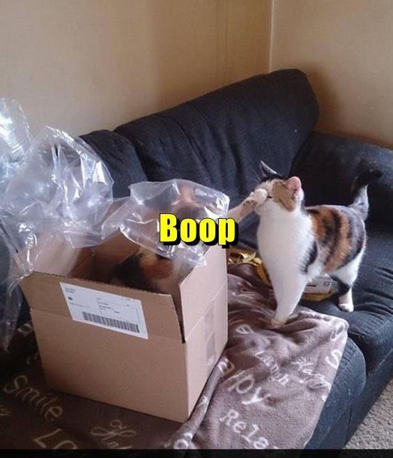 Cat - Boop Rela Smile 57