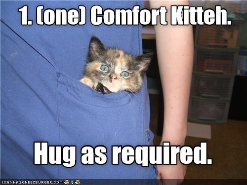 Cat - 1. Cone) Comfort Kitteh. Hug as required. ICANHASCHEEZBURGER.COM